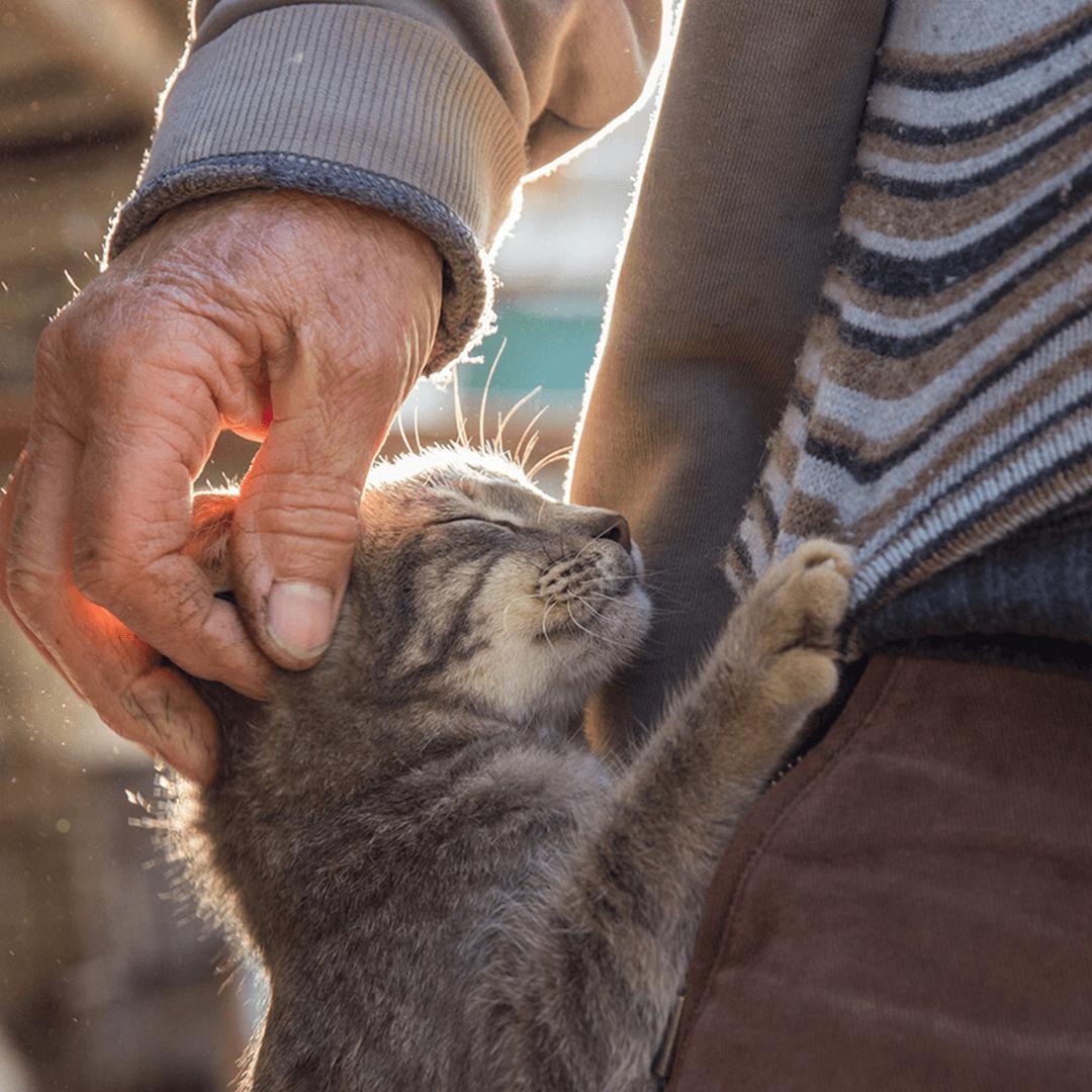 Wat vertelt je kitten met lichaamstaal?