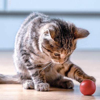 Laat je kitten niet met je handen spelen