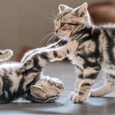 Ongewenst gedrag bij katten afleren
