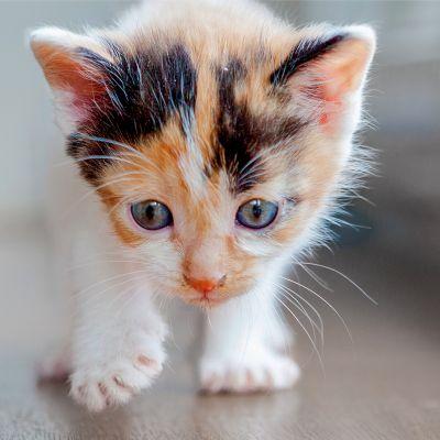 Je kitten alleen thuis? Neem voorbereidingen