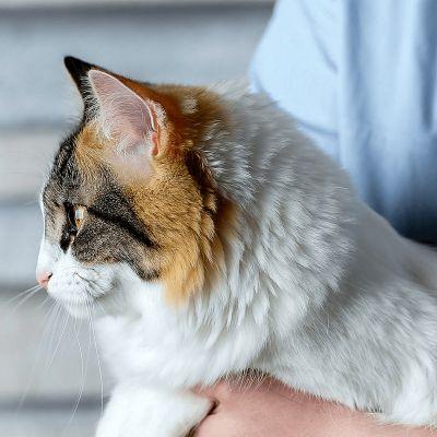 Sterilisatie of castratie bij katten