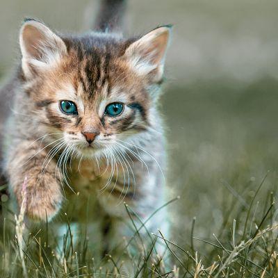 Je kitten voor het eerst naar buiten