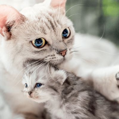 Hoe socialiseer ik mijn kitten?