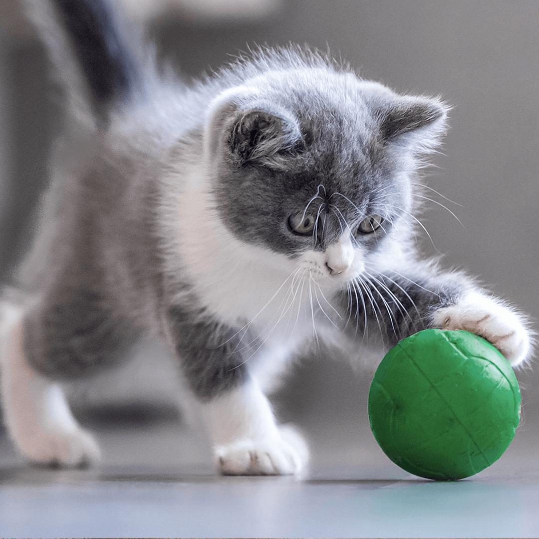 Hoe speel ik leuk én verstandig met mijn kitten?