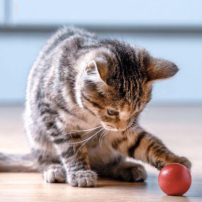 Spelen houdt je kitten gezond!