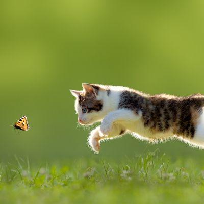 Het jachtinstinct van je kat
