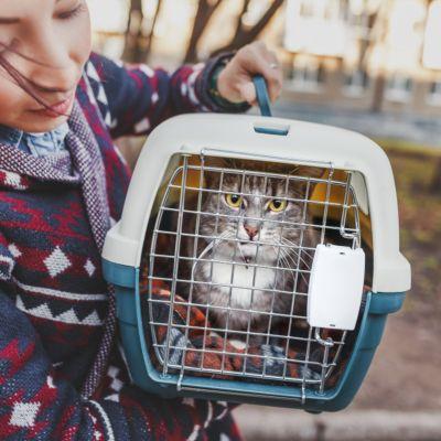 10 tips om je kat zonder stress te vervoeren
