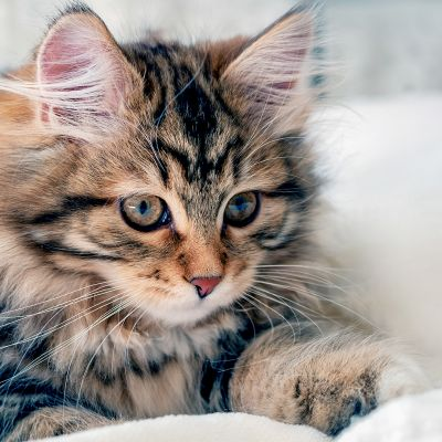 Je kitten is bijna volwassen - een nieuwe fase!