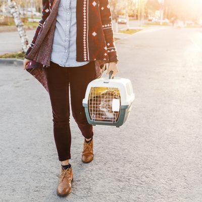 Tips voor reizen met je kat