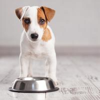 Welk hondenvoer is geschikt voor mijn pup?