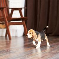 Hoe maak ik mijn huis puppy-proof?
