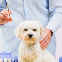 Inenten, ontwormen en ontvlooien van jouw pup