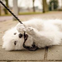 Mijn hond trekt aan de lijn?
