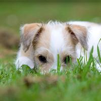 Welke planten zijn giftig voor mijn pup?