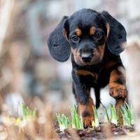 Bescherm je pup tegen vergiftiging