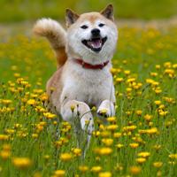 Zelf speeltjes maken voor je hond