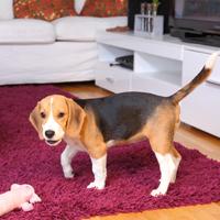 Spelen met je hond kan prima binnenshuis