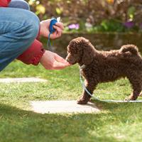 Waarom is de hondenschool belangrijk voor je pup?