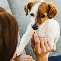Hoe beloon ik goed gedrag van mijn pup?