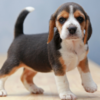 Ontwikkeling van botten en spieren bij jouw pup