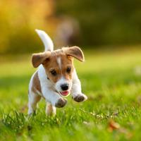 Hoe geef ik mijn pup de juiste beweging?