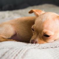 Hoe leer ik mijn puppy alleen thuis te blijven?