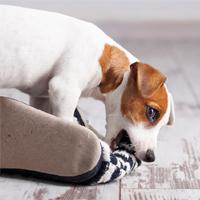 Het melkgebit en definitief gebit van jouw pup
