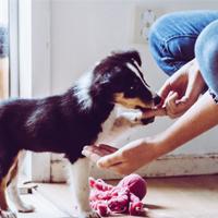 Hoe voed ik mijn pup consequent op?