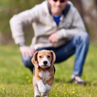 Jij en je hond in de rangorde