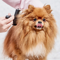 Hoe verzorg ik de vacht van mijn pup?