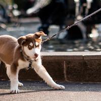 Help, mijn puberende hond luistert niet!