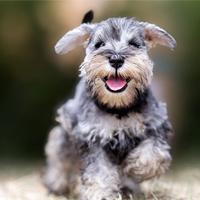 Geef ik mijn pup nog wel het juiste hondenvoer?