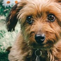 Hoe kies ik een goed hondenpension?