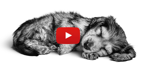 Je pup is geen hond  - Vraag Royal Canin om advies