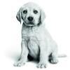 De natuurlijke afweer van jouw pup is kwetsbaar.