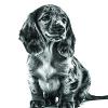 De spijsvertering van jouw pup heeft extra aandacht nodig.