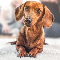 Hoe introduceer ik een pup bij mijn kind?