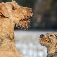 Kies ik een puppy of een volwassen hond?