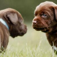 Kies ik een rashond of een kruising?