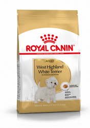 West Highland White Terrier Adult