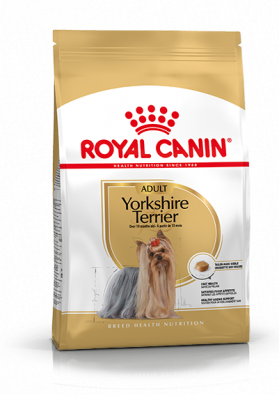 Yorkshire Terrier Adult